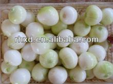 2013 new crop fresh onion prices in india