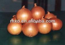 2014 China  fresh   new   onion  exporter