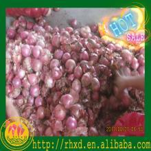 2014  market   onions   prices