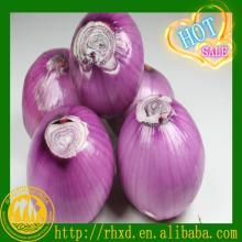 new farm fresh red onion for sale