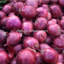 China Fresh Red Onion/Market price Red Onion
