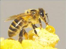 Competitive  Royal   Jelly   Price