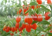 Best quality import Goji berries