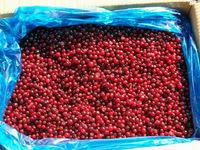 South African New Crop Wild Frozen Lingonberry