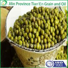 Dry high quality bulk green mung bean with a good price (Skype: live:wangqiudantt)