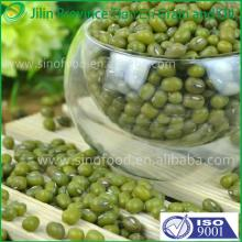 2013 new green  mung   bean   seed  with competitive price