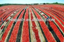 2014  China  hot sale  Tomato   Paste