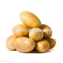 From China fresh potato fresh vegetables