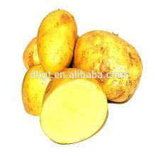 frozen potato exported to foreign vegetable market