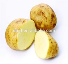 New fresh organic vegetables, fresh potatoes in  dubai