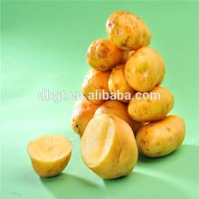 high quality dutch seed potato from china