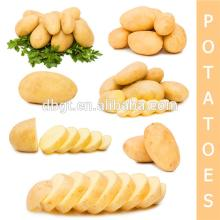 Types of potatoes are variety all kinds of potato type for 8 types of chinese cuisine