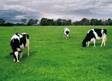 Australian Milk Powder - Full Cream (FCMP) 25kg highest quality from Australia (Produced by MG)