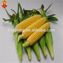 haccp   certified   companies  supply quality products corn starch