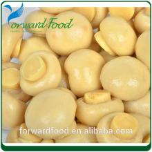 market prices for mushroom in can