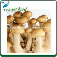 straw mushrooms in can  haccp   certified   companies