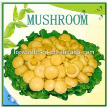 New crop canned mushroom in tin with top quanlity
