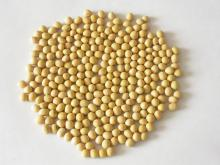 Non GMO Soybeans