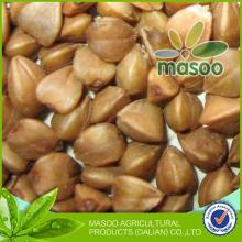 organic buckwheat groats/buckwheat dried