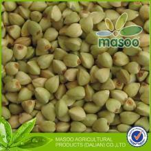 Buckwheat of green buckwheat cereal