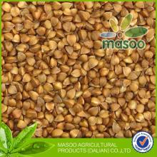organic buckwheat export from biggest buckwheat company