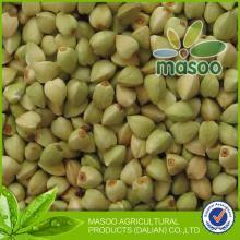 Buckwheat of green buckwheat cereal and buckwheat dried
