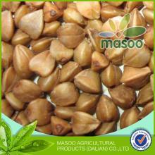 non-gmo buckwheat groats/buckwheat dried