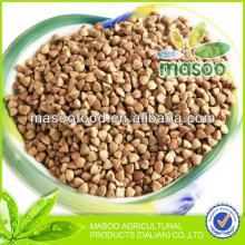 2012 new crop China roasted buckwheat ,buckwheat price