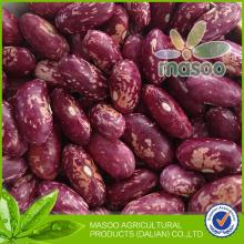 New 2013 Crop China Hot Sell Speckled Kidney Beans - Purple Speckled Kidney Beans