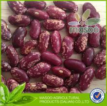 Bulk dried long speckle kidney beans, the purple beans, new crop purple speckled kidney bean
