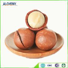 Organic healthy sun dried macadamia nuts with ISO, Kosher, whole sale