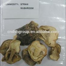 straw  mushroom  in tin