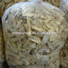 Fresg King  Oyster   Mushroom  ( Pleurotus  eryngii / Eryngii)