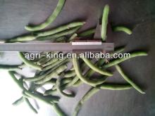 new harvested iqf bulk green beans