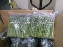 iqf green asparagus spear