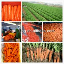 grade A organic frozen organic carrot