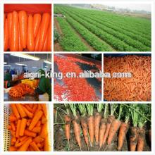 2014 new hot sale high quality chinese frozen carrot and frozen peas and carrots