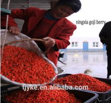 best quality Goji berry ningxia goji berry