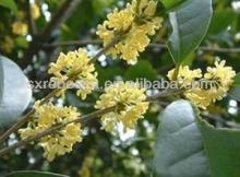 natural raw material cinnamon barks extract powder