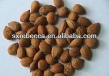pure natural Amygdalin powder by GMP