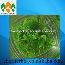 higu quanlity Green tea extract good for health