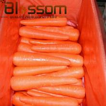 Top quality vitamin fresh carrot natural asian vegetable market prices