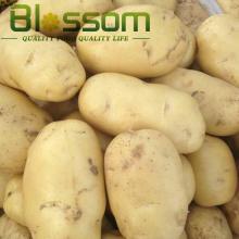 Good prices fresh potato top quality fresh asian  vegetable   market  prices