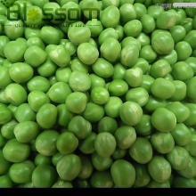 2014 New crop IQF fresh frozen green  pea s sugar  sweet   snap   pea s