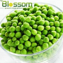 Wholesale frozen vegetable IQF bulk frozen green beans
