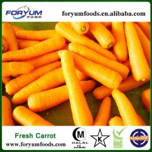 Cheap Carrots in China