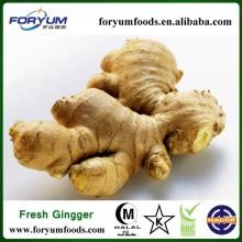Chinese Fresh Ginger With Top Quality