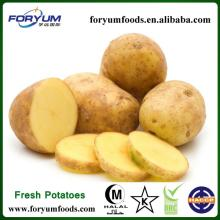 Fresh Potato Agricultural Product