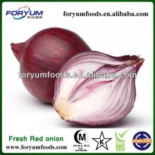 Dried   Red   Onion