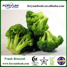 Frozen Green Broccoli Cut